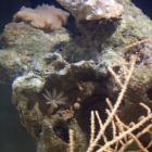 Einsiedler und Korallen