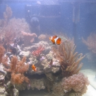 Aquarium mit milchigem Wasser