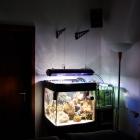 Aquarium und Technikbecken