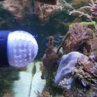 Futter-Ei mit 2mm Löchern auf Tunze Nanostream Magnet