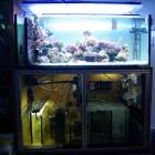 Aquarium mit Technikbecken