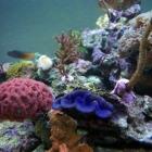 diverse Korallen