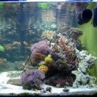 Gesamtansicht Aquarium