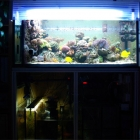 Gesamtansicht Aquarium mit Technikbecken