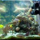 20081009_aquarium_1