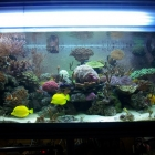 20081009_aquarium_2