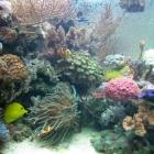 20081009_aquarium_3