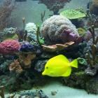 20081009_aquarium_4