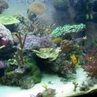 20081009_aquarium_5