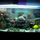 20081022_aquarium_1