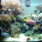 20081022_aquarium_2