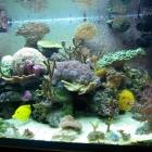 20081022_aquarium_3