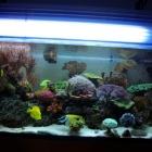 20081229_aquarium_1