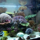 20081229_aquarium_2