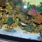 20090209_aquarium