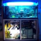 20090610_aquarium_1