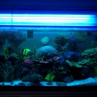 20090610_aquarium_2