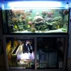 20090615_aquarium_1