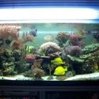20090615_aquarium_2