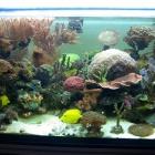 20090615_aquarium_3