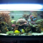 20090727_aquarium_1