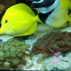20090727_aquarium_2
