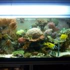 20090823_aquarium_1