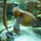 20090823_aquarium_3