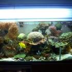 20090907_aquarium