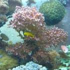 20090907_hystrix_mit_korallengrundeln
