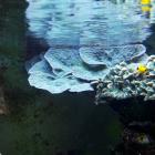 diverse Korallen und Korallengrundel