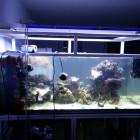 Aquarium 4 Tage nach dem Umzug