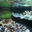 diverse Korallen, unten mit Problemen...