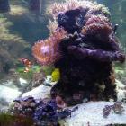 Gesamtansicht Aquarium Kopfseite