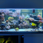 Gesamtansicht Aquarium links