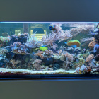Gesamtansicht Aquarium rechts