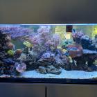 Gesamtansicht Aquarium links