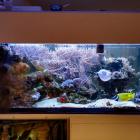 Gesamtansicht Aquarium linke Seite