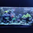 Gesamtansicht Aquarium rechte Seite im Blaulicht