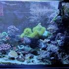 Ansicht Aquarium rechte Seite im Blaulicht