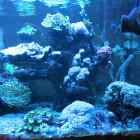 Ansicht Aquarium