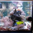 Gesamtansicht Aquarium Stirnseite