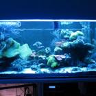 Gesamtansicht Aquarium linke Seite im Blaulicht