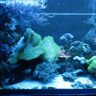 Ansicht Aquarium linke Seite im Blaulicht