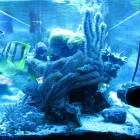 Gesamtansicht Aquarium Stirnseite im Blaulicht