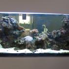 Gesamtansicht Aquarium rechte Seite