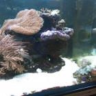 Ansicht Aquarium linke Seite