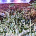 Algen für Algenrefugium